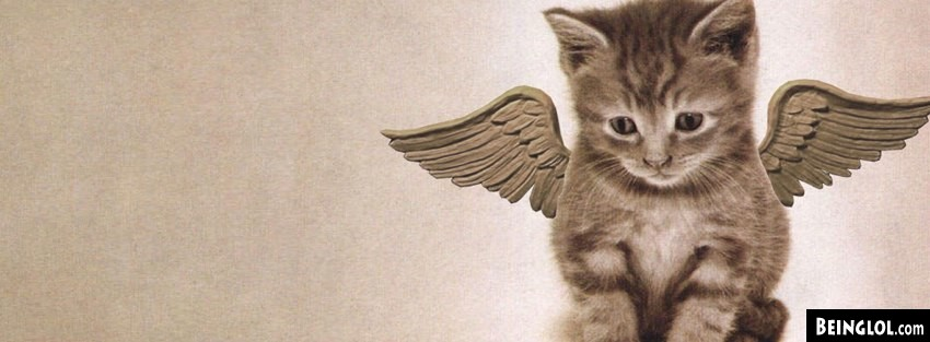 Angel Kitty Facebook Cover