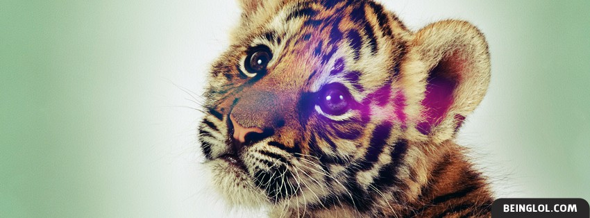 Baby Tiger Facebook Cover