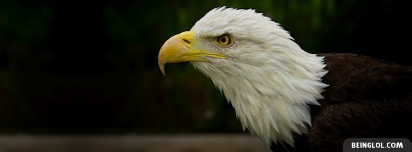 Bald Eagle Facebook Cover