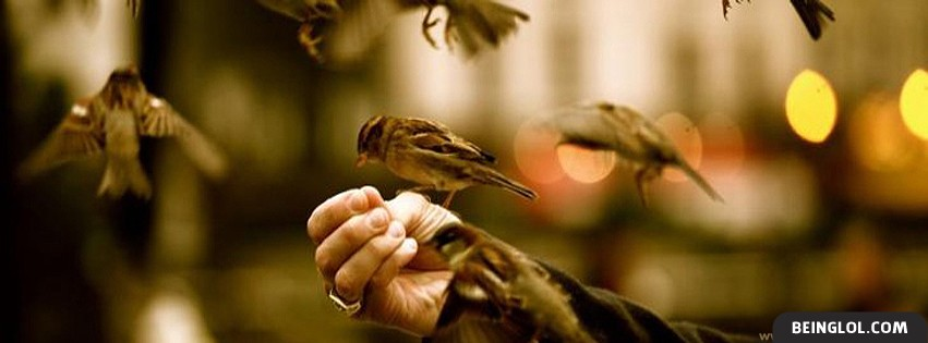 Beautiful Bird ! Facebook Cover
