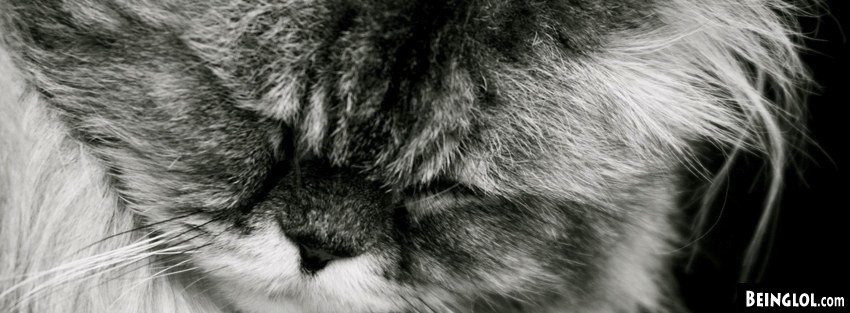 Cat Falling Asleep Facebook Cover