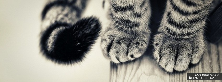 Cat Paws Facebook Cover