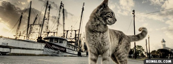 Cat And Boats Facebook Cover