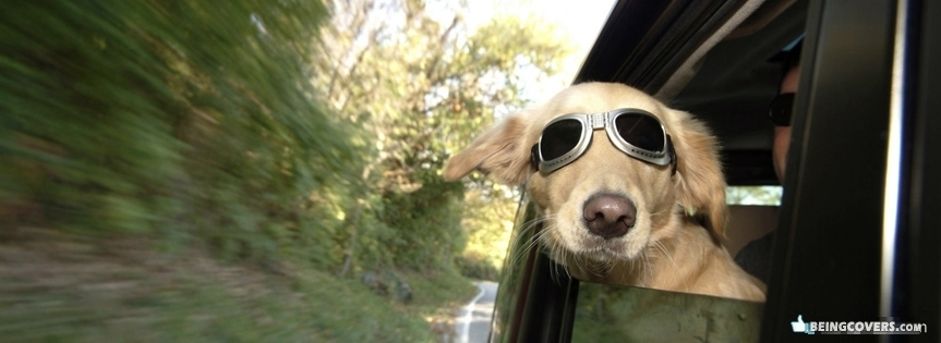 Cool Dog Facebook Cover