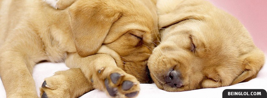 Cuddling Pups Facebook Cover