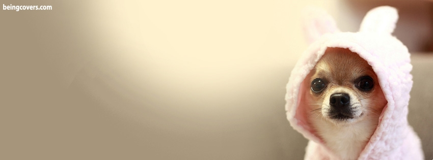 Cute Dog Facebook Cover