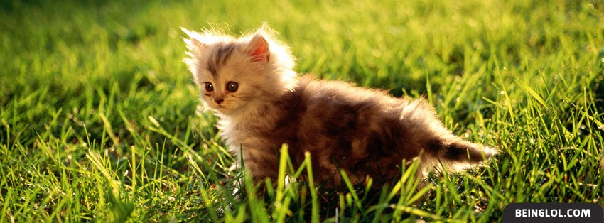 Cute Kitty Facebook Cover