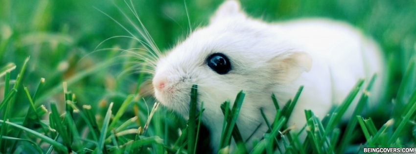 Cute Lovely Hamster Facebook Cover