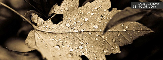 Fallen Leaf Facebook Cover