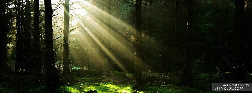 Forest Sun Rays Facebook Cover