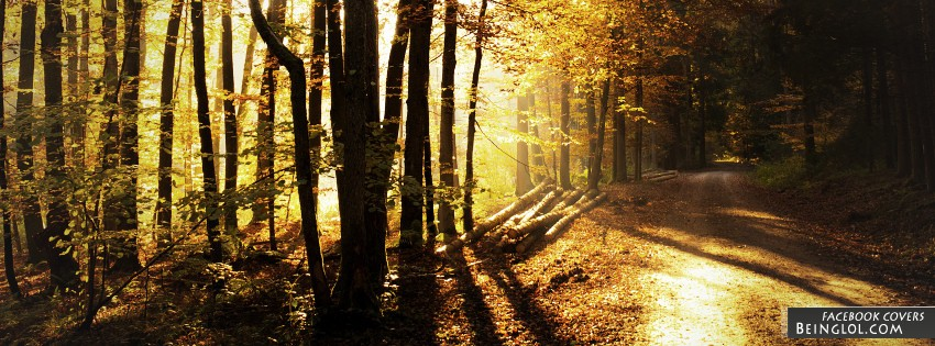 Forest Track Facebook Cover