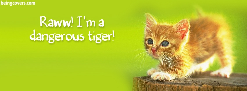 Funny Cat Facebook Cover