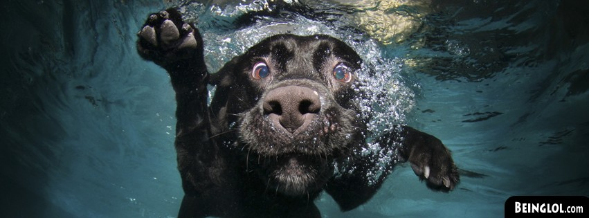 Funny Underwater Dog Facebook Cover