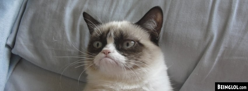 Grumpy Cat Facebook Cover