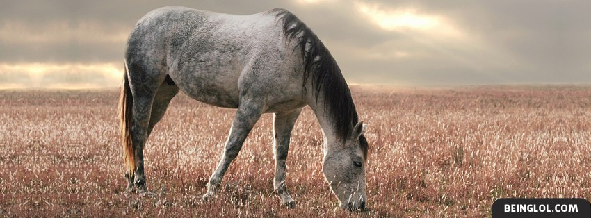 Horse Grazing Facebook Cover