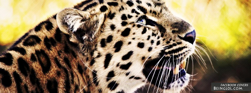 Leopard Facebook Cover