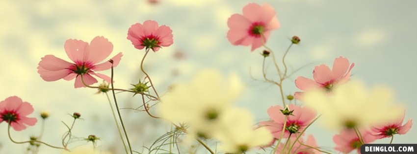 Light Pink Flowers Facebook Cover