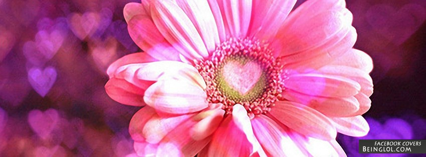 Love Daisy Facebook Cover