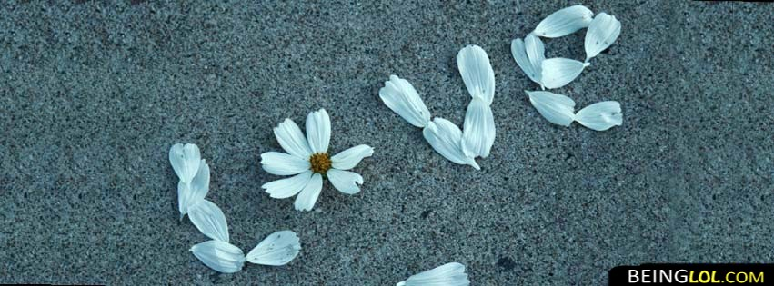 love flower facebook cover Cover