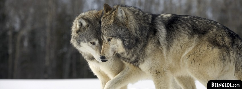 Lovely Wolf Couple Facebook Cover
