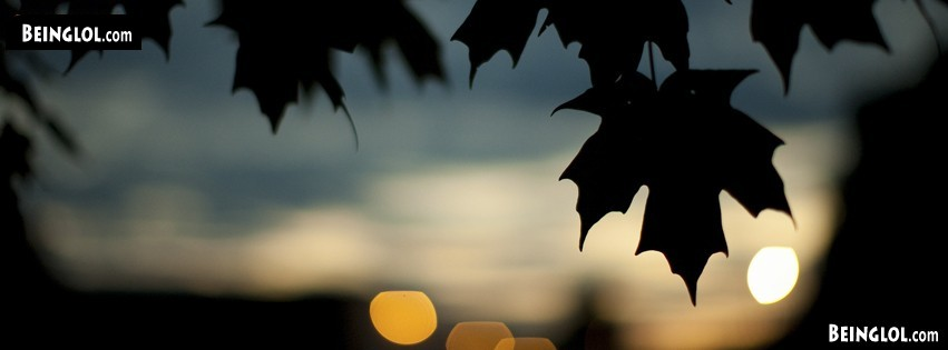 Nature Sunset Leaves Facebook Cover