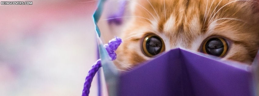 Naughty Cute Kitten Facebook Cover