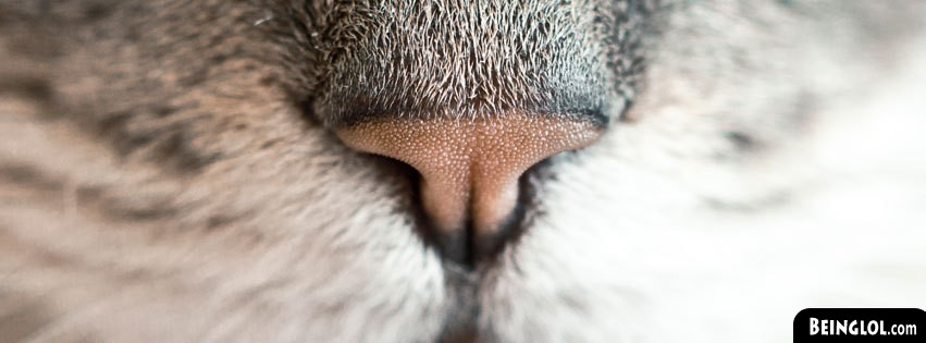 Nose Up Facebook Cover