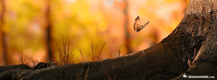 Orange Beautiful Butterfly Facebook Cover