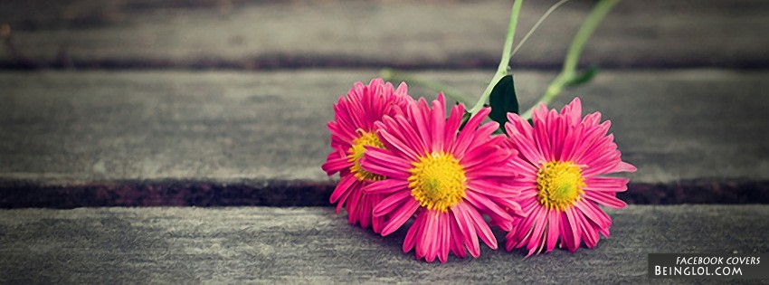 Pink Daisies Facebook Cover