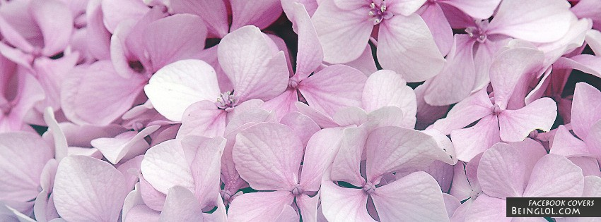 Pink Flowers Facebook Cover