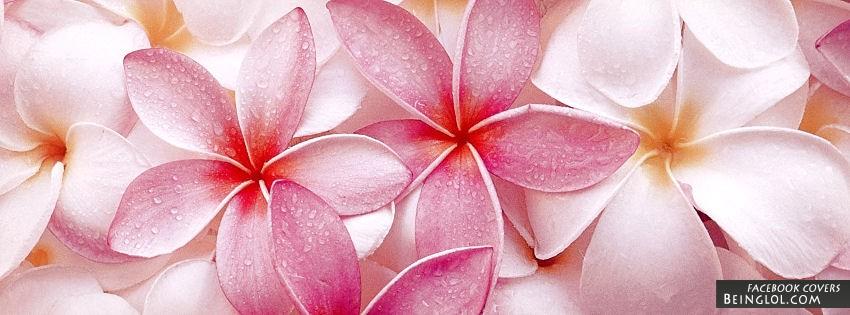 Pink Plumerias Cover