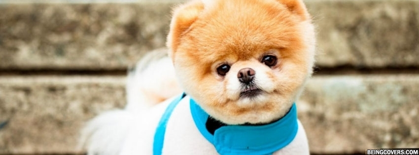Pomeranian Cute Puppy Cover