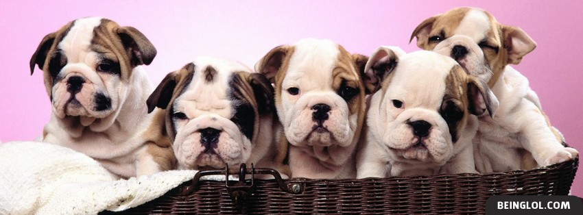 Puppies In A Basket Facebook Cover