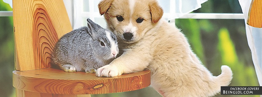 Puppy And Bunny Facebook Cover