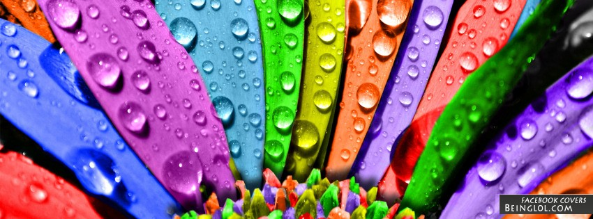 Rainbow Petals Facebook Cover