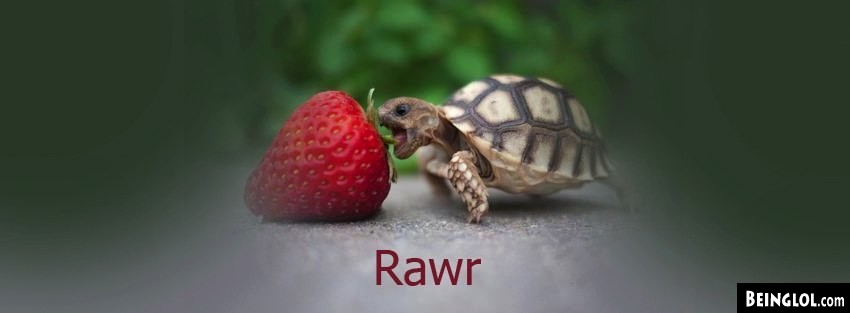 Rawr Turtle Facebook Cover