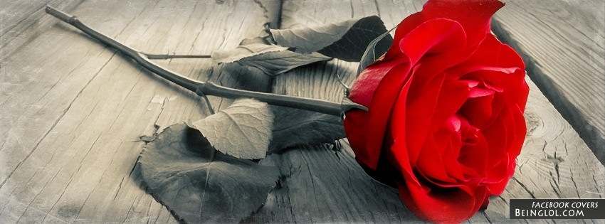 Red Rose Facebook Cover