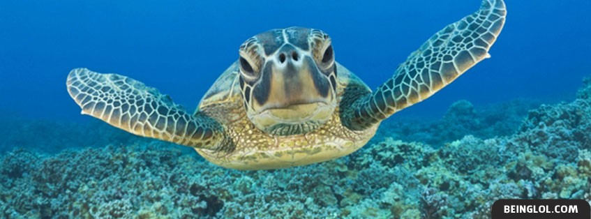 Sea Turtles Facebook Cover