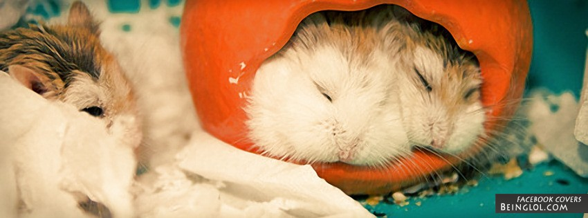 Sleeping Hamsters Facebook Cover
