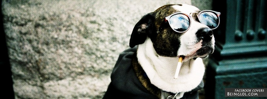 Smoking Dog Facebook Cover