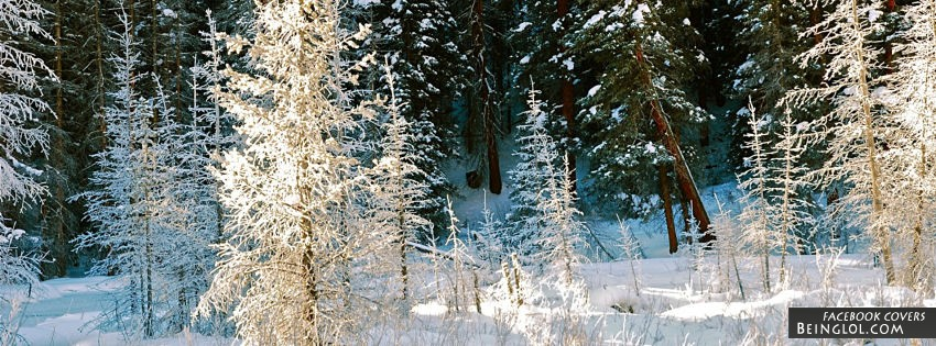 Snowy Forest Facebook Cover
