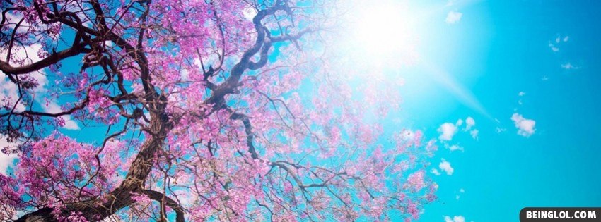Spring Sunshine Facebook Cover