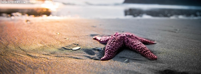 Starfish On Beach Cover