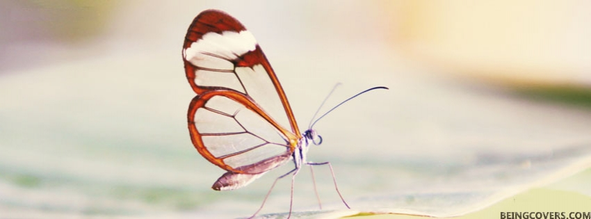 Transparent Wings Butterfly Facebook Cover