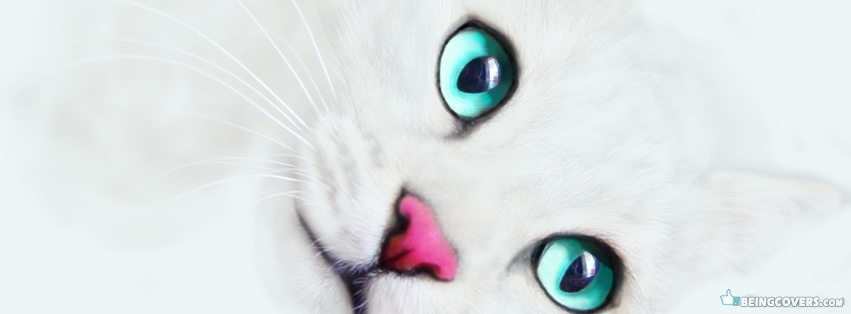 White Kitty Pink Nose Facebook Cover