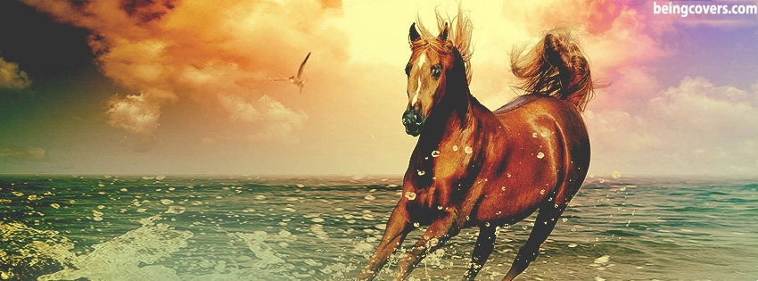 Wild Horse Facebook Cover