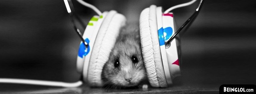 Cute Hamster Facebook Cover