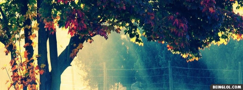 Autumn Tree Cover