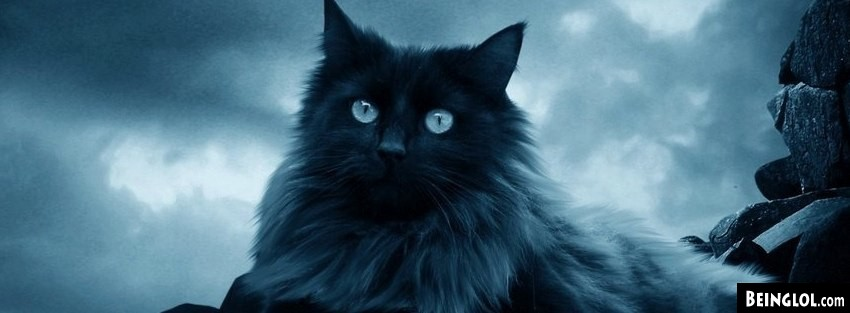 Batman Cat Facebook Cover