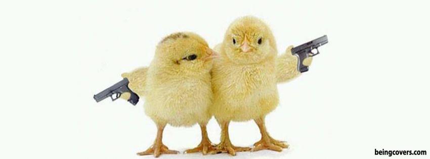 Cute Chicks Cover